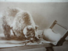 """Photo Cute Funny """" Who's Been Sleeing In My Bed """" Bear in Bed Vintage"""