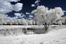 Nikon D70 D70s Infrared Conversion Service. Infrared 690nm