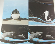 Seaworld Scrapbook 12x12 Paper 4 Sheets Killer Whale Ocra Shamu