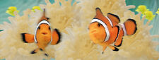 NEW 3D lenticular bookmark CLOWN FISH by Emotion Gallery