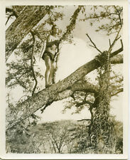 Tarzan Goes To India Jock Mahoney holding vine in tree top