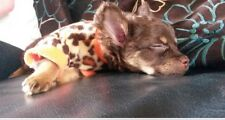 Chihuahua Size XSmall Warm Leopard Print Fleece Top Puppy Cat Pet Dog Clothes