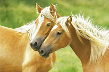 ANIMAL POSTER Blondes Horses