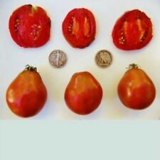 Japanese Black Trifele - Organic Heirloom Tomato Seeds - Great Slicer - 40 Seeds
