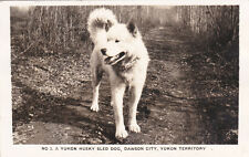 RP: Yukon Husky Sled Dog , DAWSON CITY , Y.T. , 1949
