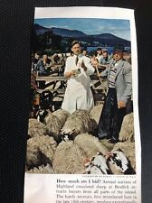 P1-2 Ephemera 1965 Picture Arran Brodick Sheep Auction
