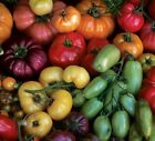 TOMATO 'Heirloom Mix' 20 seeds green red pink fruit vegetable garden heritage