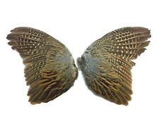 USA SELLER - Pheasant Feathers 1 Pair Natural Ringneck Pheasant Feather Wing