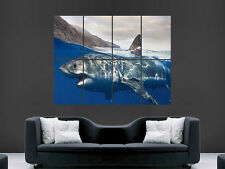 GREAT WHITE SHARK SEA   WALL POSTER ART PICTURE PRINT LARGE HUGE