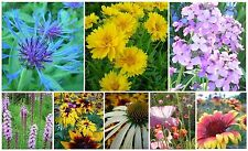 PERENNIAL WILDFLOWER MIX * EASY WILDFLOWER GARDEN  * BULK MIX * 500+ SEEDS