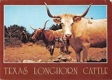 BR71969 texas longhorn cattle cow vache usa  animal animaux