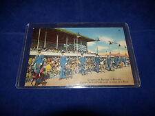 Vintage Greyhound Racing In Florida Parade Before Fans Used Postcard