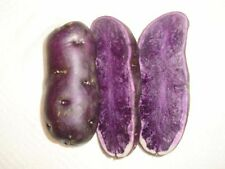 4 - 5 pcs blue fingerling potatoes seeds bulbs purple