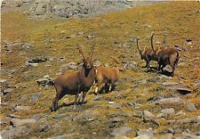 BF39232 ibex gran paradiso bouquentins  france  animal animaux