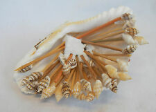Unusual Shell Cocktail Stick Holder and Shell Topped Cocktail Sticks - NEW