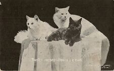 CARTE POSTALE POSTCARD FANTAISIE CHAT CAT ANIMAL TWO'S CAMPANY THREE'S A CROWD