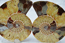 "Pair Split Ammonite Deep Crystal Cavity 146mm XLARGE 5.8"" Fossil 110myo n1265"