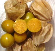 Dwarf Cape Gooseberry Seeds - Use in Jams or Eat Raw - theseedhouse - 30+ Seeds
