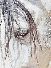 ART PRINT POSTER PHOTO NATURE ANIMAL CLOSE UP ANDALUSIAN HORSE LFMP1238