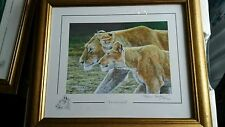 "Stephen Gayford Limited Edition ""TENDERNESS II"" Lion Print 195/1100 Framed"