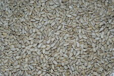 10kg Sunflower Hearts - Bakery Grade Kernels- Wild Bird Food