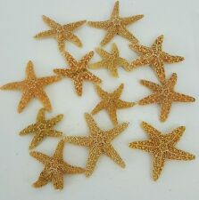 Sugar Starfish (12pc) Starfish, Seashells, Arts and Crafts Beach Decor Nautical