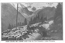 4406) VISTA VAL PRESENA E CIMA (TRENTO) SULLA STRADA DEL TONALE GREGGE DI PECORE