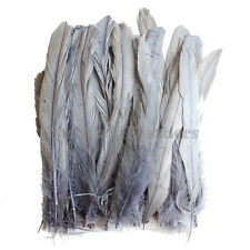 "50 pcs 6-8"" long Silver Grey Dyed Rooster COQUE tail Feathers for crafting, NEW"