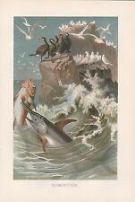 Schwertfisch auf der Jagd schöne Lithographie von 1890 Xiphias gladius Swordfish