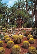 BG11826 islas canarias echinocactus ejemplares   spain