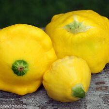 Yellow Patty Pan Squash Heirloom Seeds -Non-GMO -Untreated - Open Pollinated!