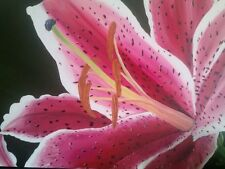 """Original Oil Painting Tiger Lilly Flower 24""""x36"""""""