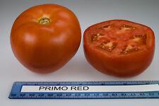 Tomato Seeds - PRIMO RED VFFT/TSWV - Hybrid Bush Tomato Variety - 25 Seeds