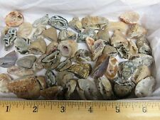 Natural Agate Oco 1 Lb Lots 50 Pieces Total Geodes Half Specimens Polished #2