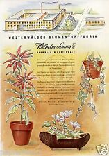 Blumentopf Fabrik Spang Baumbach XL Reklame 1956 Westerwald Ton Werbung Blumen