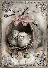 Shabby Chic Placca Muro ARTE STAMPA FRANCESE Petits Oiseaux UCCELLINI (ref JDL)