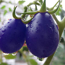 Purple Cherry Tomato Garden Organic Heirloom Fruit Vegetable Plant, 50 Seeds