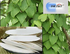 DR T&T Dioscorea batatas Chinese yam shan yao 100g dry herb