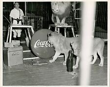 CIRCUS LIONS TRAINER COCA-COLA AD SIGNS & ORIGINAL VINTAGE PHOTO