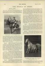 1900 Performing Horse Mr Goodnight Undresses And Goes To Bed