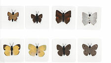 8 Laminated Real Butterfly Specimen Collection Set (60x60 mm)