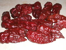 25 Rare Black Naga Morich Pepper Seeds from Organically Grown NON GMO Plants
