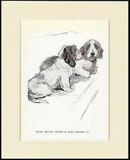 PETIT BASSET GRIFFON VENDEEN TWO DOGS LOVELY DOG PRINT MOUNTED READY TO FRAME
