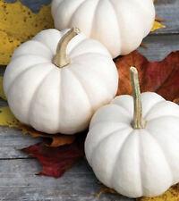 Pumpkin CASPERITA ☆ Sweet White Fruit ☆ Mini White that STAYS White ☆ 30 Seeds