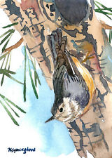 ACEO card -Nuthatch in the pine tree, Art print of an ACEO original watercolor