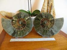 S.V.F - Madagascan Ammonite Cut pair - 22.6 cm - Large - Free Stands -  2.78kg