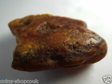Large 20g Genuine Baltic AMBER stone Raw Natur Bernstein 琥珀 5.5 cm