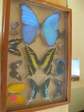 11 Framed Real Butterfly collection from Peru