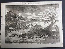 GRAVURE XVIIIè La Pêche A L'Epervier Jakob Conrad Back Graveur 18th C Engraving