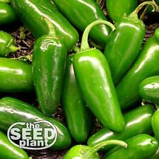 Jalapeno M Pepper Seeds 100 SEEDS-SAME DAY SHIPPING